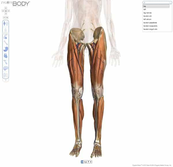 application 3D en ligne pour apprentissage de l'anatomie